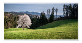 Poster  Blooming Apple Tree in Black Forest - Andreas Wonisch