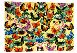 Tableau en verre acrylique  Great diversity of butterflies - Kambili