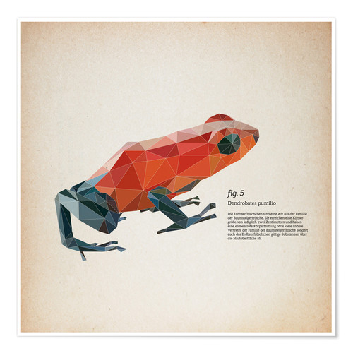 Poster fig5 polygon frog square
