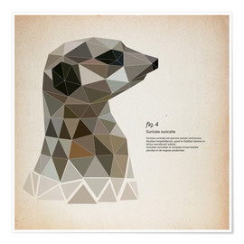 Poster  fig4 Polygon meerkat  square - Labelizer