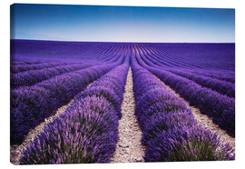 Toile  Lavender field in Provence - Matteo Colombo