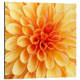 Tableau en aluminium  Yellow Dahlia - Martina Cross