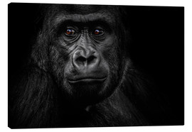 Toile  Monkey Gorilla - WildlifePhotography