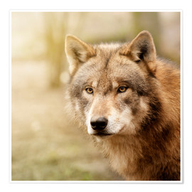 Poster Wolf