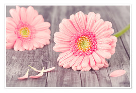 Poster  Gerbera flower bloom - pixelliebe