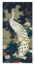 Poster  A White Peacock under a Pine tree - Itô Jakuchu