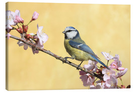 Tableau sur toile  Blue tit on a branch of cherry - Uwe Fuchs