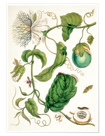 Poster  Passion flower and insects - Maria Sibylla Merian