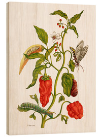 Bois  Peppers and insects - Maria Sibylla Merian