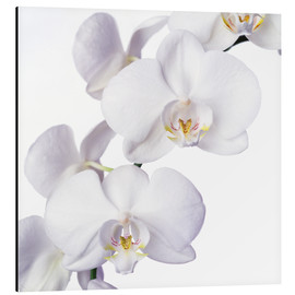 Tableau en aluminium  Orchid flowers - Johnny Greig