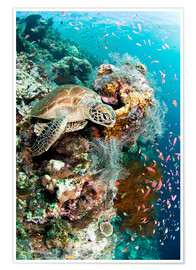 Poster  Tortue verte - Matthew Oldfield