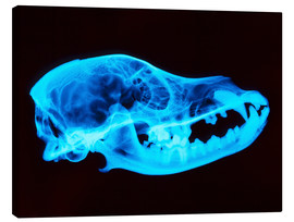 Tableau sur toile  Dog skull X-ray - D. Roberts