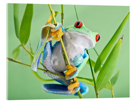 Verre acrylique  Red-eyed tree frog - Linda Wright