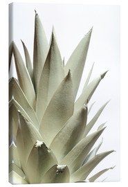 Tableau sur toile  Ananas blanc - Neal Grundy