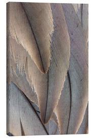 Toile  Crane Feathers - Paul D. Stewart