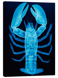 Tableau sur toile  X-ray of lobster - D. Roberts