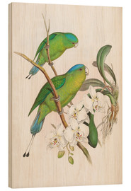 Tableau en bois  Philippine Racket tailed Parrot - John Gould