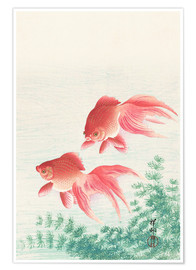 Poster  Deux poissons rouges - Ohara Koson