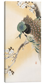 Tableau sur toile  A peacock in a cherry tree crown - Ohara Koson