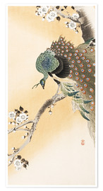 Poster  A peacock in a cherry tree crown - Ohara Koson