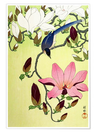 Poster  Magpie with Pink and White Magnolia Blossoms - Ohara Koson