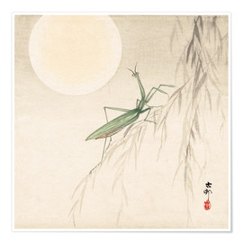 Poster praying mantis on willow branch, a full moon above