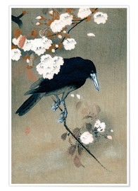 Poster Crow and blossom