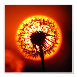 Poster Dandelion in red