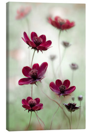 Tableau sur toile  Cosmos - Mandy Disher