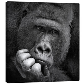 Toile  thoughtful gorilla - Antje Wenner-Braun