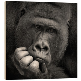 Bois  thoughtful gorilla - Antje Wenner-Braun