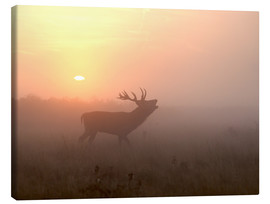 Toile  Misty morning stag - Greg Morgan