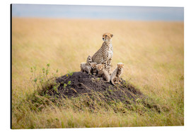 Tableau en aluminium  Leopard mother - Ted Taylor
