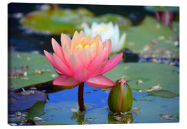 Tableau sur toile  water lily - GUGIGEI