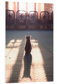 Forex  Cat at the window - Matteo Colombo