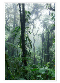 Poster  Costa Rica - Rainforest - Matteo Colombo