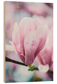 Tableau en bois  Closeup of blossoming magnolia in spring - Peter Wey