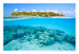 Poster  Reef and tropical island, Maldives - Matteo Colombo