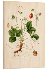 Bois  Strawberry - Carl Axel Magnus Lindman