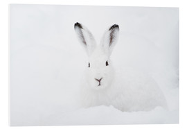 Peter Wey - Mountain hare in winter