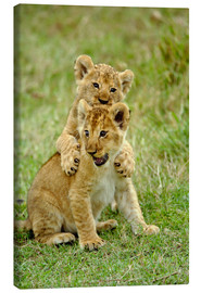 Toile  Pair of lion cubs playing, Masai Mara Game Reserve, Kenya - Adam Jones