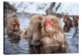 Tableau sur toile  Japanese Snow Monkeys in Nagano - Jan Christopher Becke