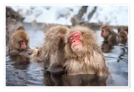 Poster Japanese Snow Monkeys in Nagano