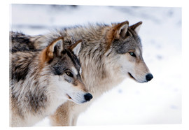 Louise Murray - Two Timber Wolves in the snow