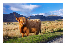 Poster  Highland cattle, Isle of Mull - Patrick Dieudonne