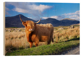 Bois  Highland cattle, Isle of Mull - Patrick Dieudonne