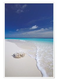 Poster  Coral on white sand beach - Sakis Papadopoulos