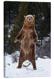 Toile  Grizzly Bear standing in the snow - James Hager