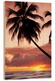 Bois  Tropical sunset, Bridgetown, Barbados, West Indies, Caribbean, Central America - Angelo Cavalli