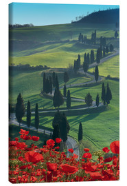 Tableau sur toile  Winding road and poppies, Montichiello, Tuscany, Italy, Europe - Angelo Cavalli